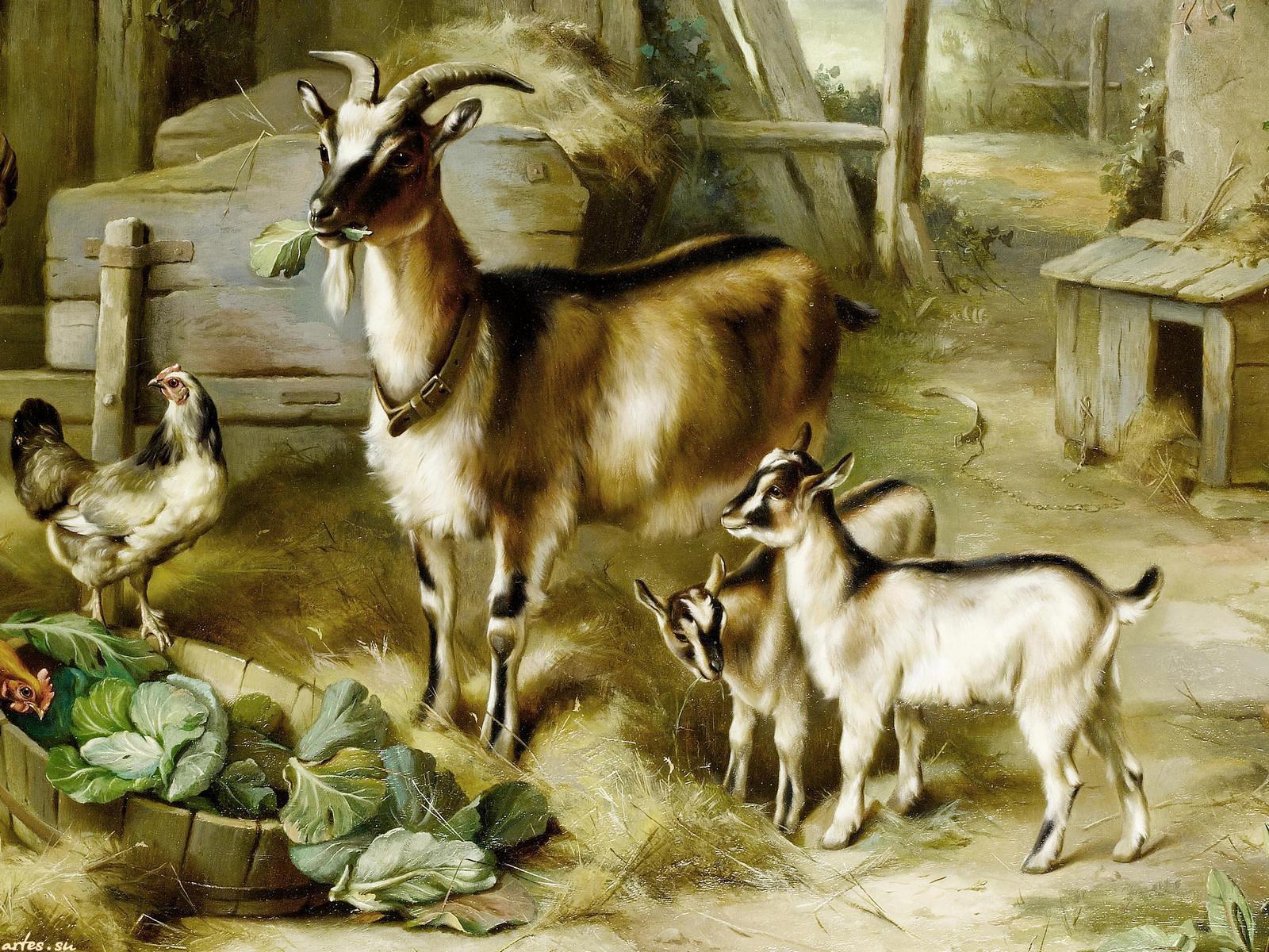 Обои рабочего стола козы