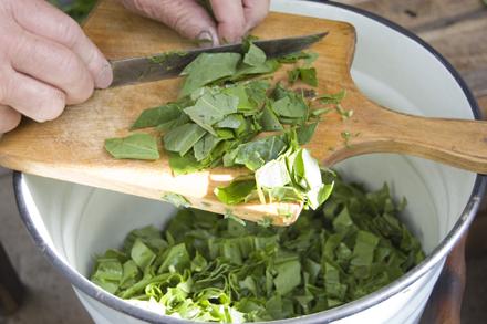 Как засолить щавель дома в кадке или ведре
