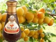 Грузинский соус Ткемали из слив