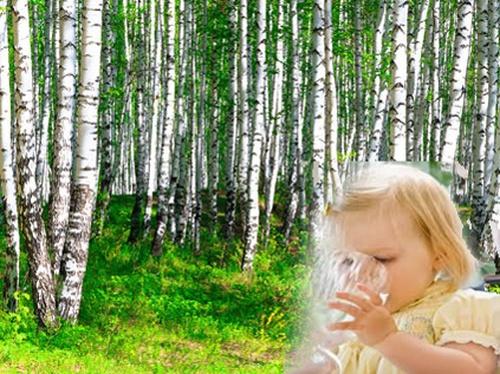 Пил бы и пил березовый сок -  медики рекомендуют