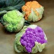 Цветная капуста - полезные свойства, польза и вред для организма.