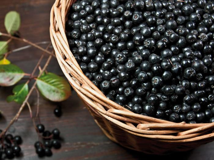 Черноплодная рябина - польза и вред для здоровья