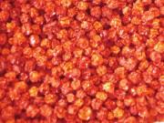Вяленые ягоды красной рябины