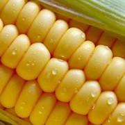 Домашняя консервированная кукуруза в банке