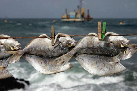 Сколько и как солить рыбу
