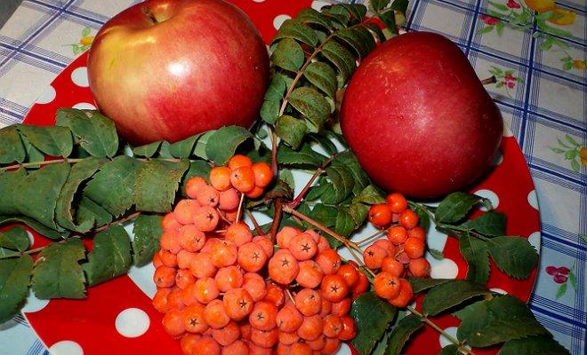 Варенья из красной рябины с яблоками