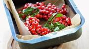 Гроздья красноплодной рябины в сахаре
