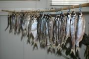 Быстрая засолка рыбы для сушки в рассоле
