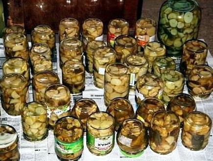 Засолка капусты в домашних условиях на зиму