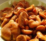 Сухой посол грибов