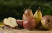 Заготовки из груш на зиму: 13 лучших пошаговых рецептов приготовления