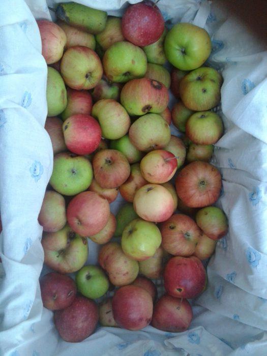 Сушка яблок в домашних условиях