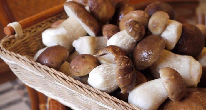 Как правильно заморозить грибы на зиму – заморозка грибов в домашних условиях - Сусеки