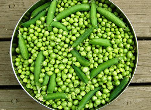 Замораживание зеленого горошка на зиму в домашних условиях 176