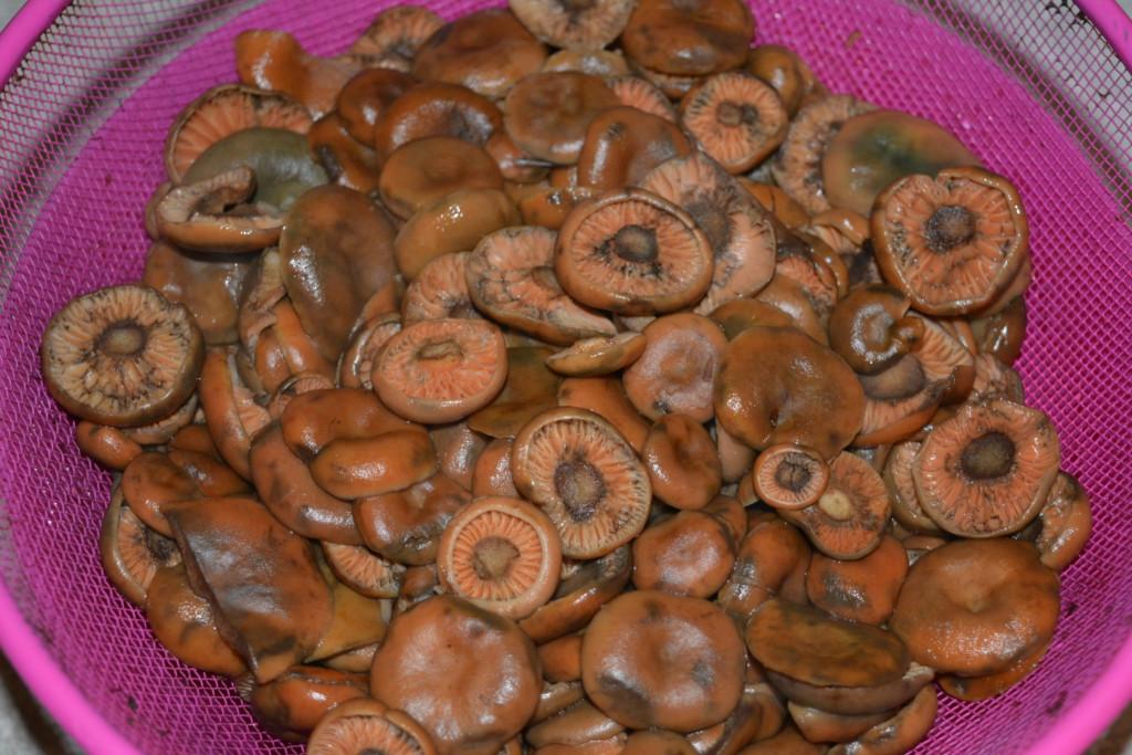 Отваренные грибы