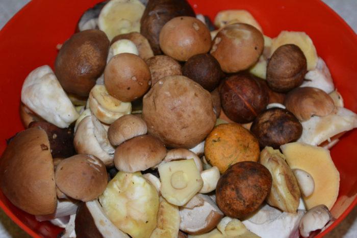 Шляпки грибов