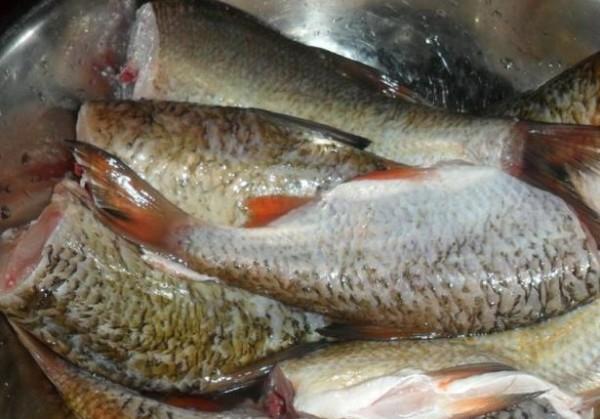 Как сделать консервы из речной рыбы в масле