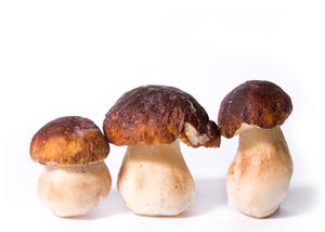 Как сохранить грибы на зиму в морозилке