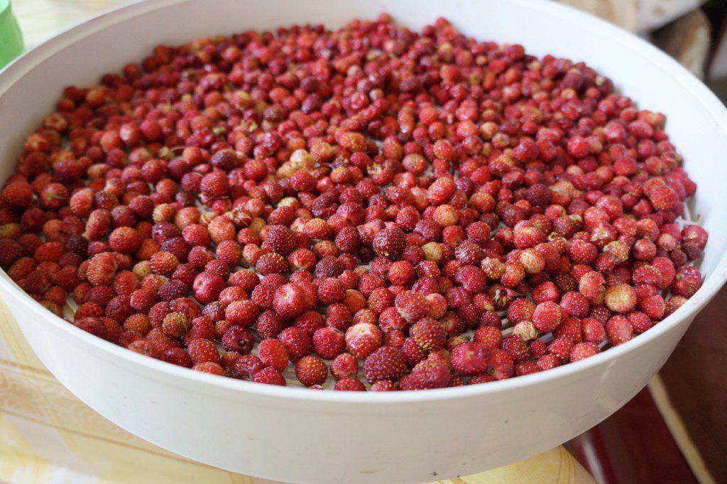 Варенье из лесной клубники. рецепт с пошаговыми фото