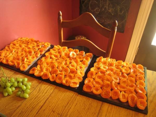 Как из абрикоса сделать урюк
