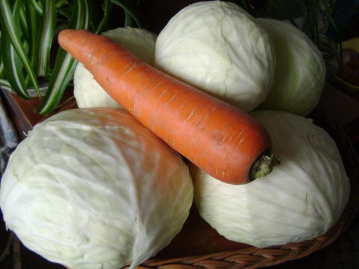Квашеная капуста с тмином и морковью на зиму по-карельски