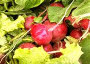 Смеси овощей для заморозки на зиму