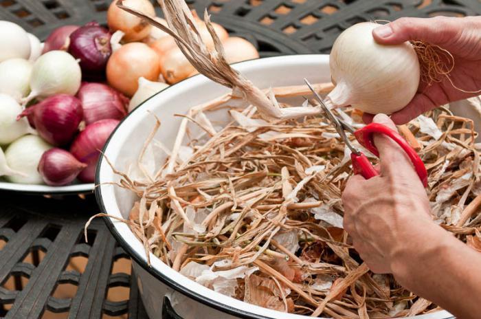 Как сушить лук