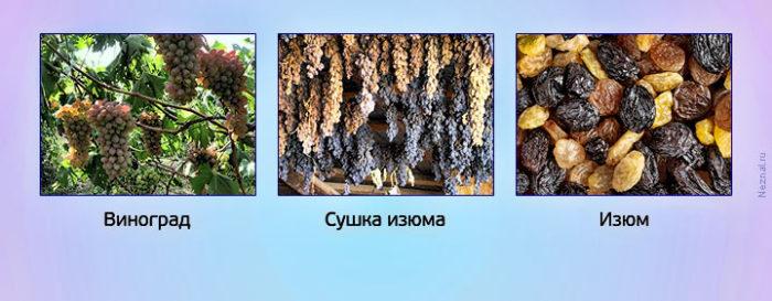виноград-сушка-изюм