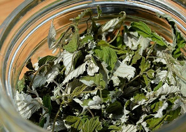 сушение листьев ежевики
