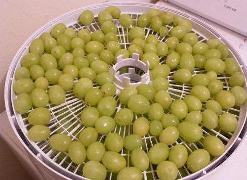 виноград для сушки