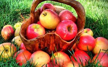 Пастила из сырых яблок