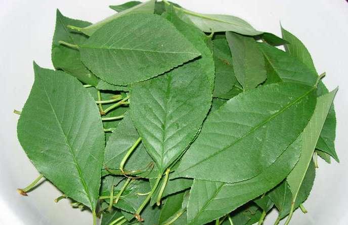 Сироп из черноплодки