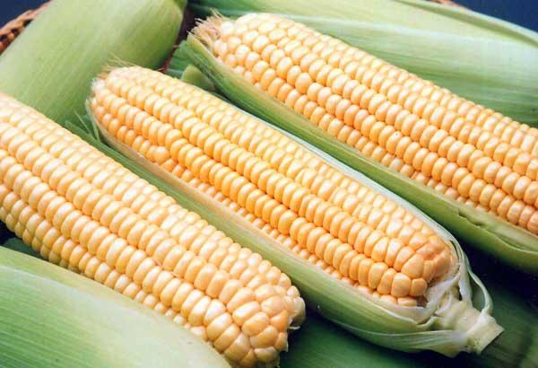 Консервированная кукуруза в зернах на зиму