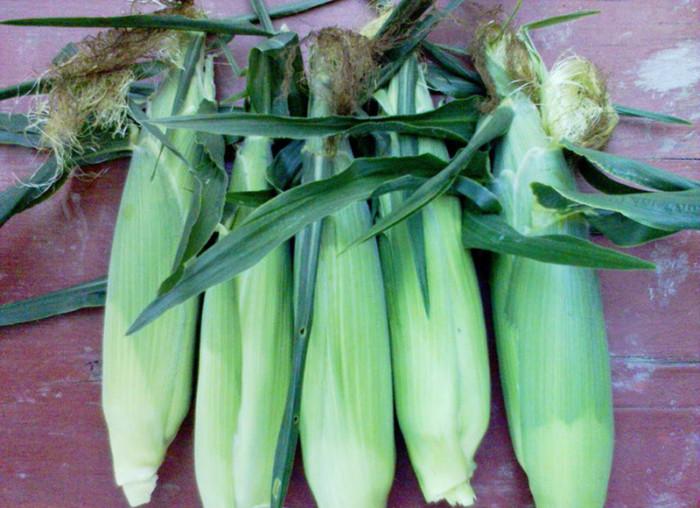 Кукуруза в початках на зиму в домашних условиях заморозка 664