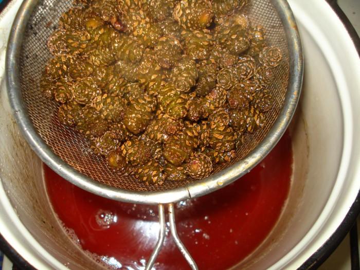 Полезное и вкусное варенье из сосновых шишек
