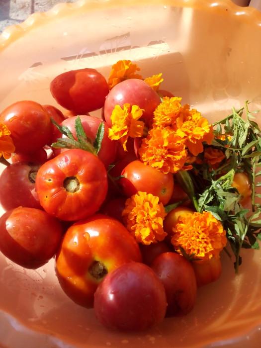 Маринованные помидоры с чернбривцами