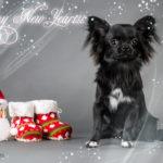 Новогодние заставки на рабочий стол с собаками и щенками