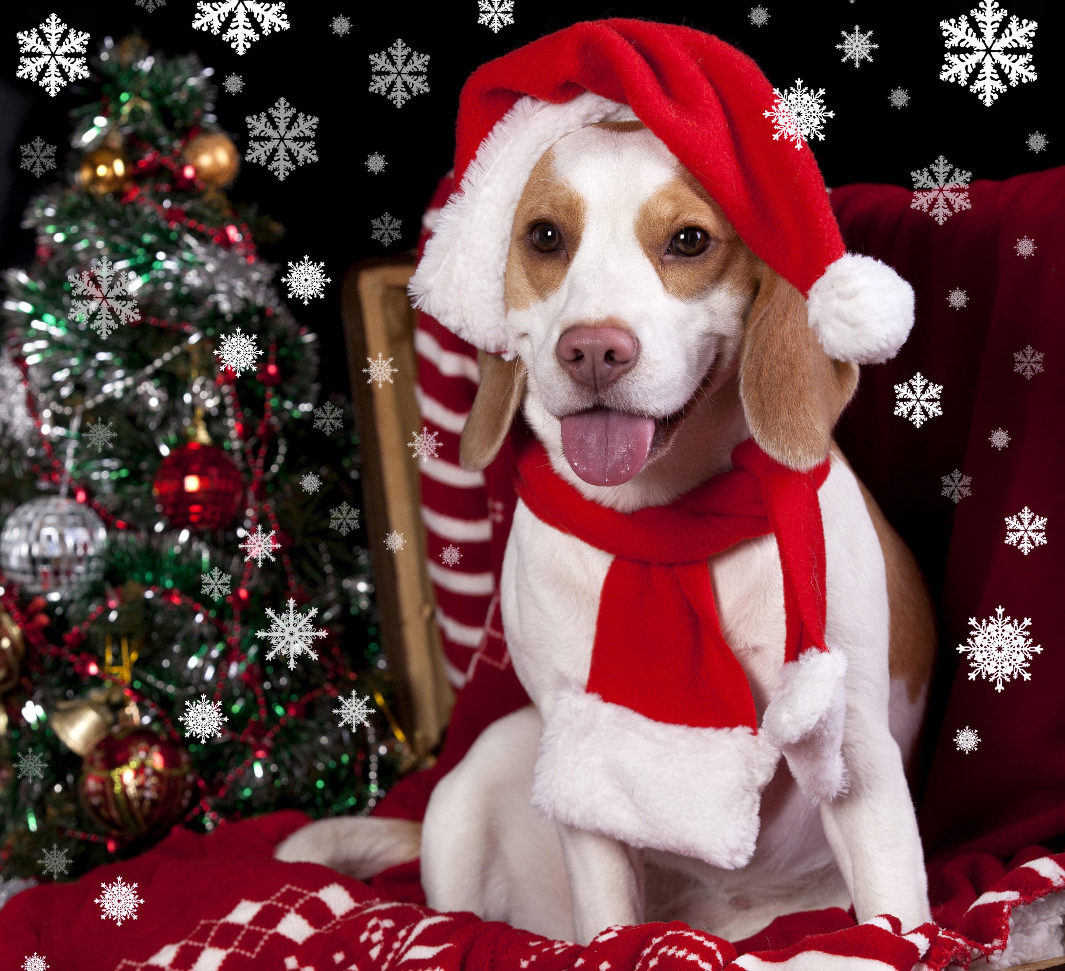 Пасха, картинки с новым годом 2018 год собаки