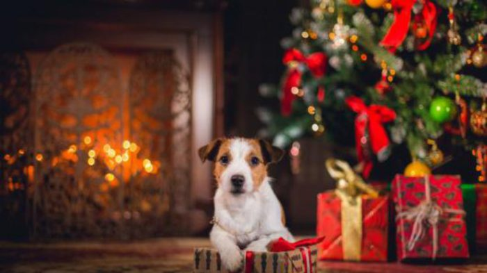 Виртуальные открытки к году Собаки